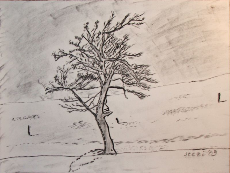 Baum-Kohle-2009